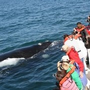 Ocean Safaris Whale And Dolphin Watching Tours