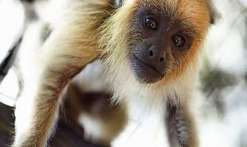 Plettenberg Bay Activities Monkeyland