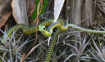 Plettenberg Bay Activities Lawnwood Snake Park